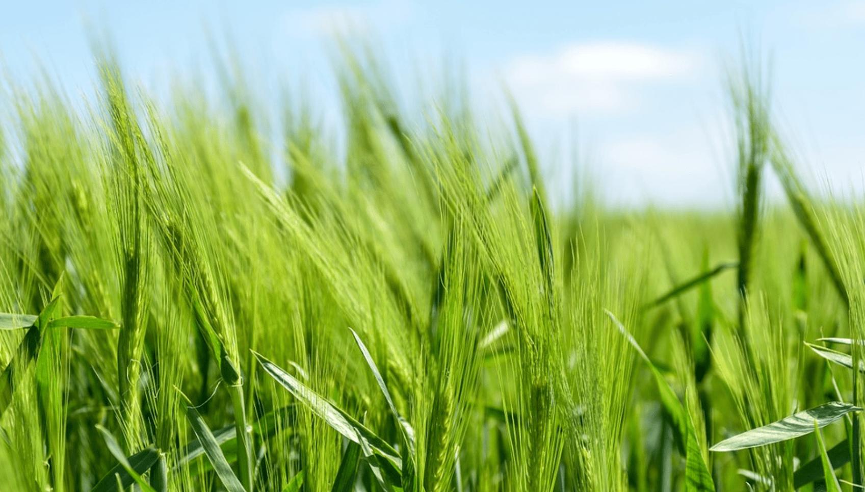 rolnictwo ekologiczne_pcbc